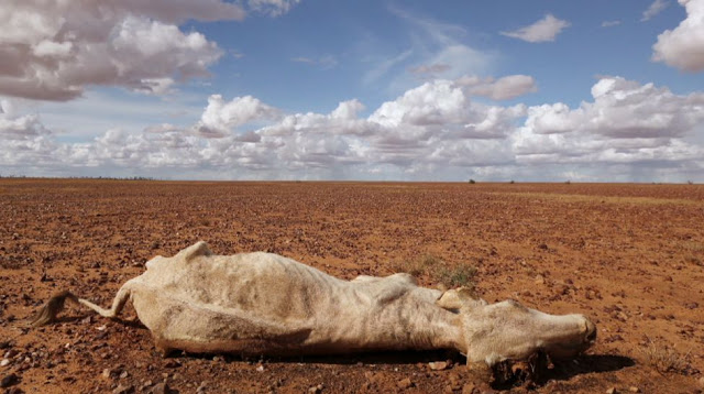 11e festival du film documenterre «Australie, le continent désert»